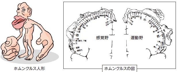 kenkou62_2